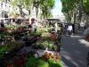 Bezier Flower Market 1