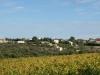 The Villa across the Vines